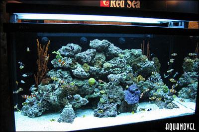 Acuario Red Sea Max S Series, una excelente opción para empezar en la acuariofilia marina con buen pie