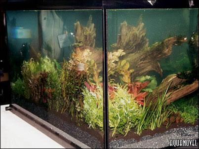 Parte trasera del acuario tras la intervenci�n de Takashi Amano
