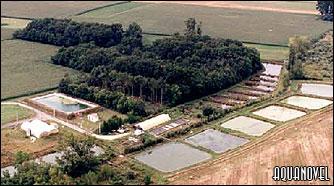 Métodos de cultivo de carassius carpio y cyprinus carpio
