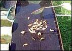 permite hacer una criba de los peces en pequeñas partidas según su variedad y sus colores