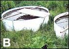 Cuencas de invernada de los progenitores de carpas Koï