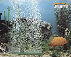 Difusor trabajando en un acuario de agua dulce