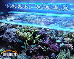 Acuario marino refrigerado por ventiladores procedentes de fuentes de alimentación.