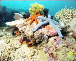 Introduciendo roca viva en el acuario marino
