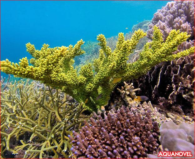 Parámetros recomendados para el crecimiento y la coloración del coral - Aditivos Red Sea