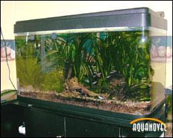 Eligiendo el acuario y su futura ubicación