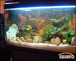 Madurando el acuario y la elección de los peces