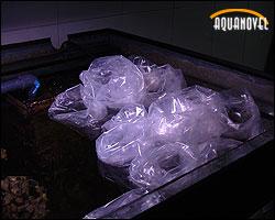 Vista de las bolsas individuales de transporte en fase de adaptación a las condiciones acuáticas