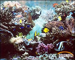 Acuario de arrecife con roca viva instalada