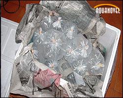 Bolsas de transporte dentro de una caja de poliespan – Envío de animales vivos por mensajería