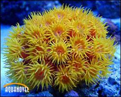 La iluminación juega un papel importante en el desarrollo de los corales