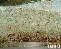 Sustrato tipo dsb donde se puede apreciar la existencia de gusanos