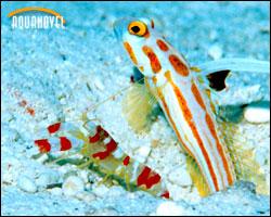 Equipos y elementos del acuario