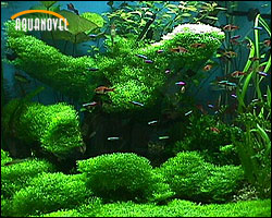 agua dulce aquanovel