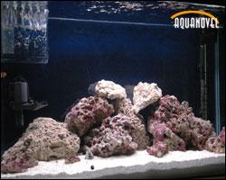 Acuario marino en plena maduración