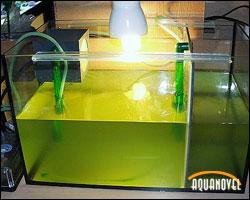 Reactor de plancton