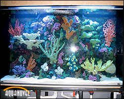Acuario marino de arrecife