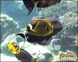 Acuario público marino de peces mariposa