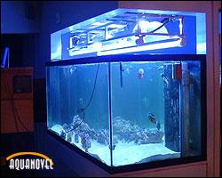 Acuario marino de solo peces iluminado con lámparas fluorescentes