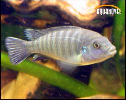 iniciación a la acuariofilia de agua dulce