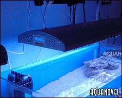 Bienvenido a nuestro curso de iniciación a la acuariofilia marina