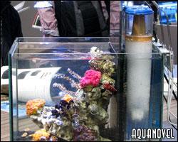 Vista de un acuario con una separación trasera para colocación de todos los equipos del sistema de filtración.