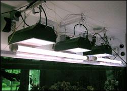 Tipos de iluminación aplicables en acuariofilia