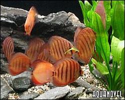 Termo regulación o control de temperatura corporal en los peces