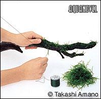 Envuelva el musgo con una capa delgada alrededor del tronco.