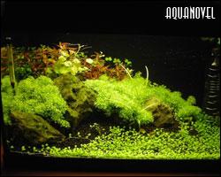 la forma de ser de la sociedad japonesa ha influenciado a sus paisajistas acuáticos