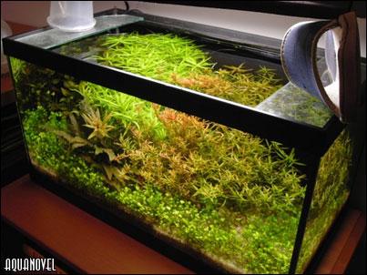 Acuarios plantados taringa for Plantas paisajismo