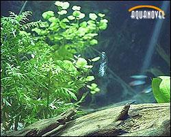 Química general del acuario plantado