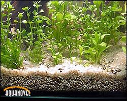 Sustratos y nutrientes para el acuario plantado